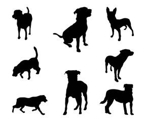 Silhouette Rottweiler Dog