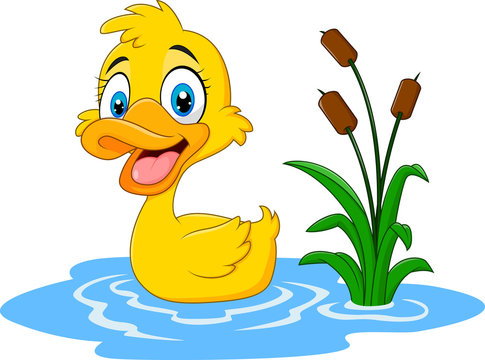 Cute baby duck floats on water