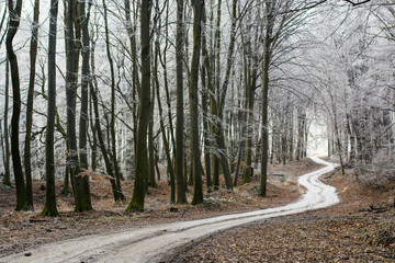 Forest road, path across the winter forest