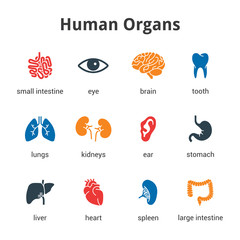 Medical human organs icon set