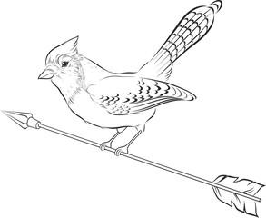 Vector illustration of blue jay silhouette. Bird.
