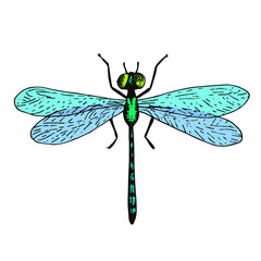 Vector dragonfly illustration, hand drawn colorful sketch