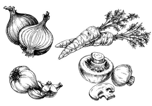 Vegetables collection, hand drawn vintage style