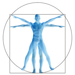 Vitruvian human or man conceptual 3d proportion anatomy body