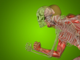Conceptual Anatomy human body on green