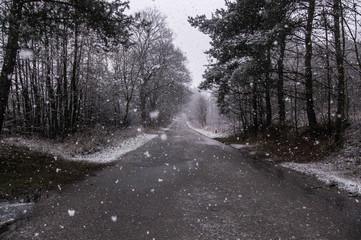 Fototapeta Pierwszy śnieg na północy Polski.