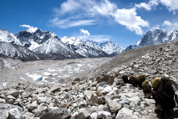 Fotobehang - Yak Going to Everest Base Camp - Nepal