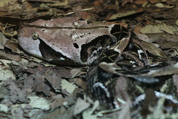 Snake in camouflage