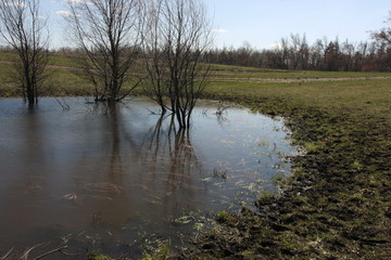 Spring puddle with flooded trees in the late april sunny day against a blue sky