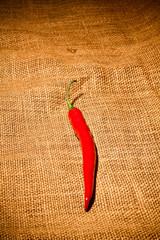 Rote Peperoni auf Sackleinen