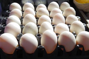 Chicken egg arrange for sale in local market