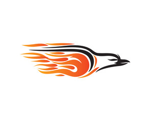 Fire Graphic Falcon