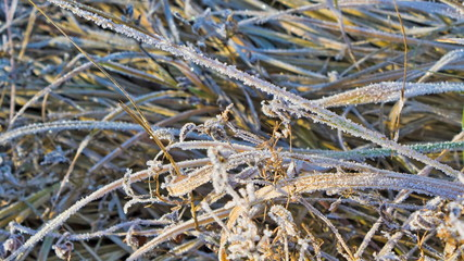 rime on the grass in the cold morning