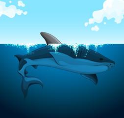 Big shark swimming under the water