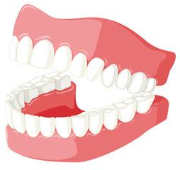 Dental theme with teeth model