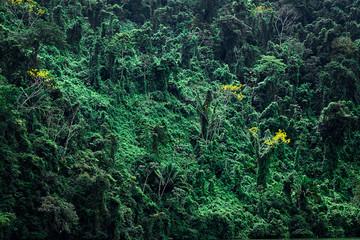 Forêt tropicale sur relief en pente
