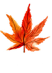 One autumn orange maple leaf