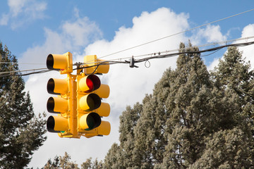 Four way yellow traffic signal among evergreen trees