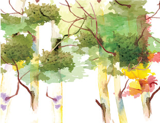 Birch trees forest background,watercolor vector brush design,vector illustration
