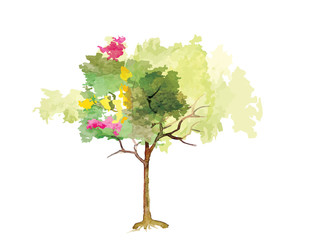 Tree ,colorful tree in summer time,watercolor vector brush design ,vector illustration