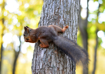 squirrel on the tree,photo,image