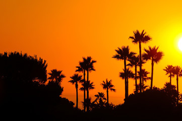 Amazing landscape of palm trees in sunset