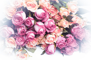 Natural background of fresh multicolored roses.