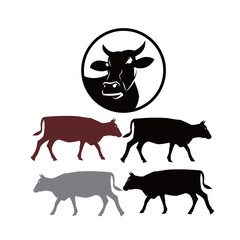 cow in circle