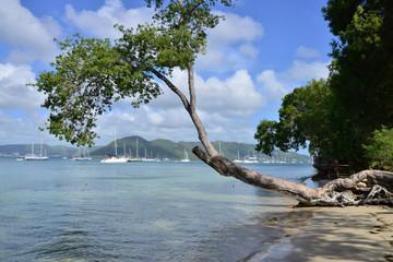Martinique, picturesque city of Sainte Anne in West Indies