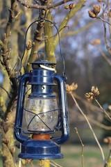 Blue lantern bat