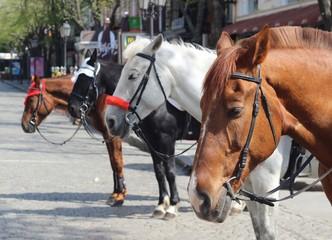 Muzzle four beautiful horses