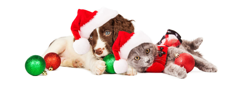 Puppy and Kitten Laying With Christmas Ornaments