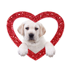 Valentine's Day Labrador Puppy Dog Holding Heart