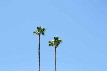 Palm trees on blue sky background