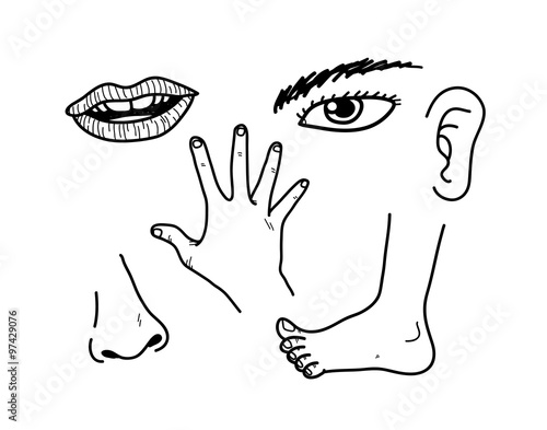 Human body parts a hand drawn vector doodle illustration of human human body parts a hand drawn vector doodle illustration of human body parts all ccuart Image collections