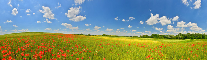 Summer countryside panorama Wall mural