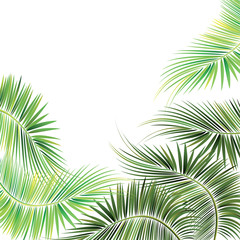 Palm tree branches.