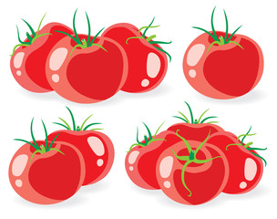 Tomatoe vector collection