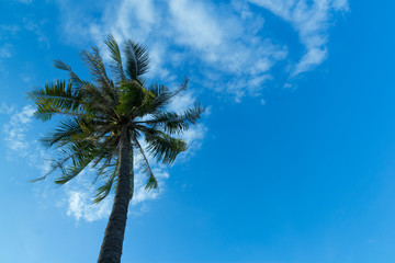 Coconut tree on the beach/Coconut tree on the beach and blue sky
