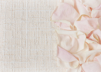 Cream rose petals on textured background