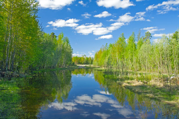 Foto op Aluminium Meer / Vijver Lake in forest