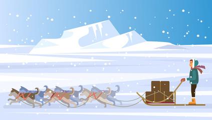 Musher and dog sled team. Vector flat illustration