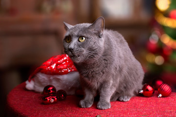 Кот на столе с рождественской елкой