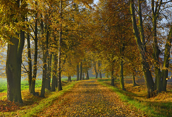 Avenue of trees between fields autumn, Silherovice near Ostrava