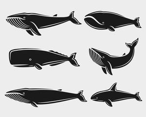 Whale set. Vector