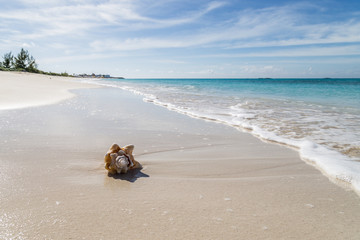 seashell on the beach/ seashell on the sand in bimini is land