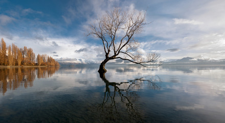 Lone tree, Lake Wanaka, New Zealand. 壁紙(ウォールミューラル)