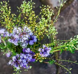 Purple Wildflowers on Dark Background