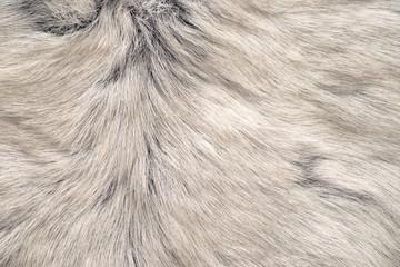 White reindeer fur texture Wall mural