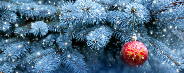 Red Christmas Ball on the Fir Branch .